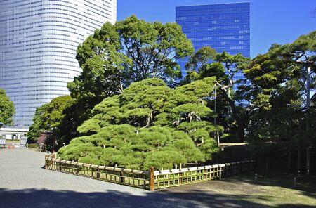 pine three: Pine hamarikyu gardens, three hundred years