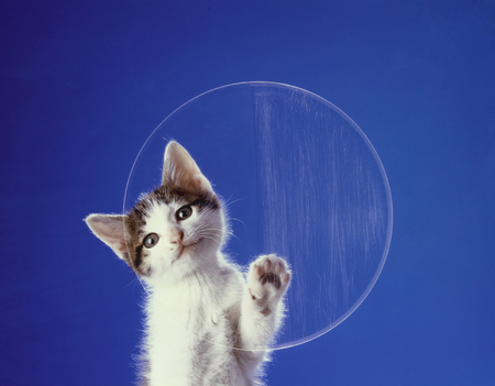 mammalian: And hit the lens cocking his head   25 620; phrase kitten Stock Photo
