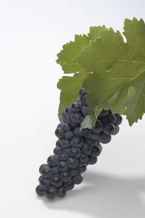 sauvignon: With a leaf red grapes Cabernet Sauvignon