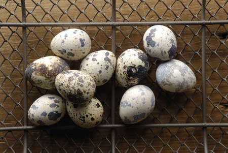 wire mesh: Quail eggs on the wire mesh