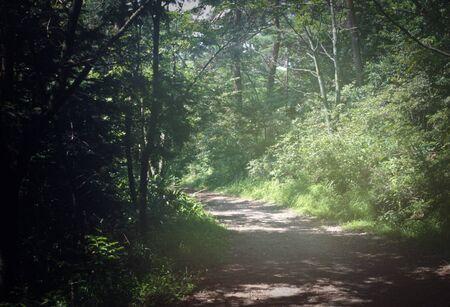 chubu: Mountain walks road