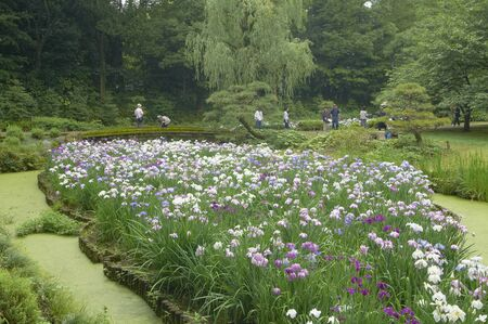 centered: Garden landscape centered on the iris fields