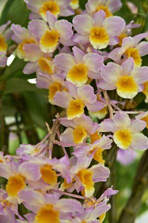 however: Pink and orange umbrella However orchid florets