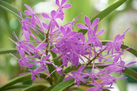 floret: Cute pink floret orchid