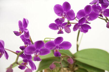 floret: Orchid to bloom pink floret