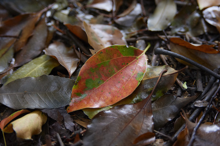 point and shoot: Beautiful color in the rain park fallen leaves Stock Photo