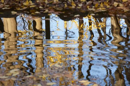 Yellow leaves of swaying trees and ginkgo to ripples of the pond