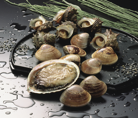 fishery products: Turban shell, abalone, clam