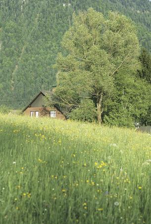 Lodge of grassland