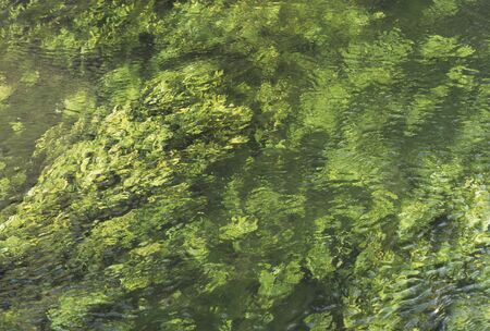 coolness: Spring water and aquatic plants