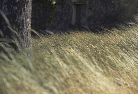 the thicket: Thicket of grassland Stock Photo