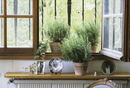 Glazenrood van rozemarijn