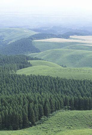 arboleda: bosque de la montaña