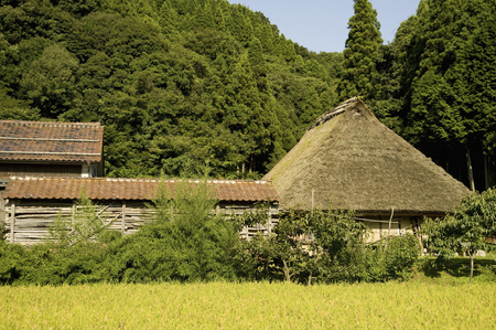 thatched roof: Thatched roof house and rice field