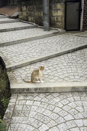 Cat stairs Stock Photo