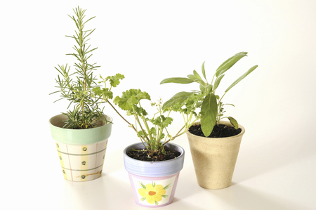 potted: Potted herbs Stock Photo