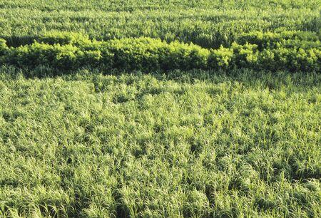 dense: Mangrove to dense Stock Photo