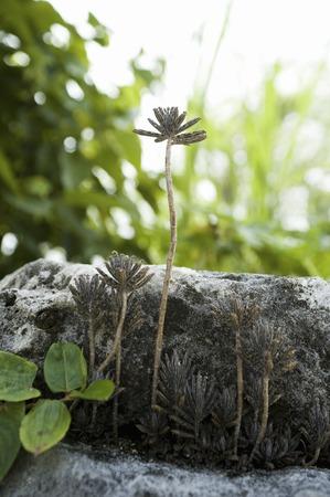 okinawa: Okinawa flower