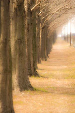 treelined: Tree-lined Stock Photo