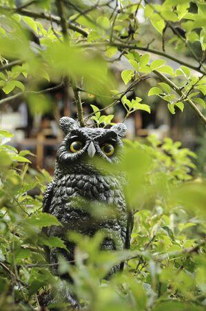 sanyo: Owl Stock Photo