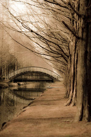 treelined: Tree-lined streets and arched bridge Stock Photo