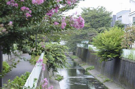 vicinity: Hamadayama the vicinity of the Kanda River and flowers