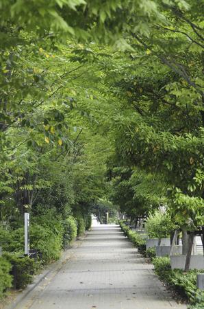 slope: Tenjin slope of Kakinokizaka Street
