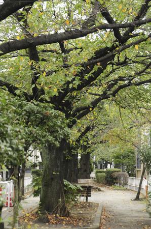 treelined: Psych green tree-lined road