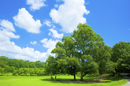 Een bomen en blauwe hemel