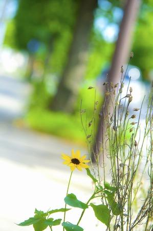 treelined: Tree-lined streets and flowers