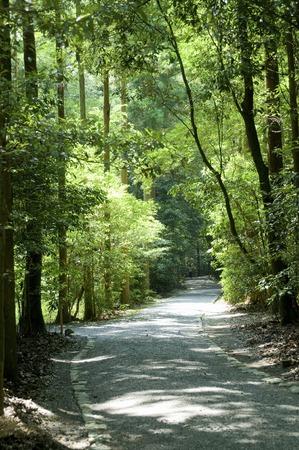 an approach: The approach of the Ise Shrine Geku