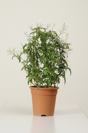 point and shoot: Potted Flower