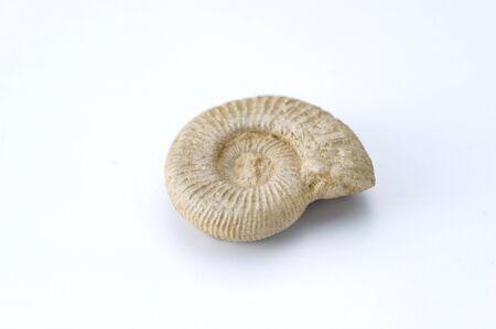 historian: Ammonite