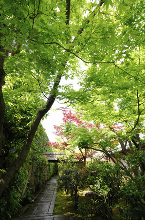 council: Courtyard of Daitokuji Jasminum Nudiflorum Council