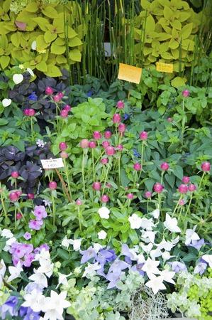 鉢植えの植物