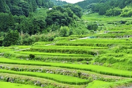 hase: Rice terraces