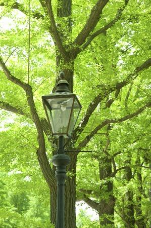 streetlights: Fresh green and streetlights Stock Photo