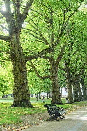 green park: Green Park Avenue
