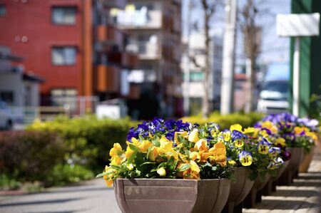 flowerbeds: City of flowerbeds Stock Photo