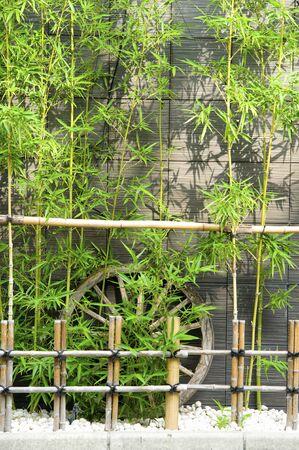 small garden: Sasa only a small garden