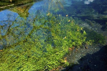 藻類と春水