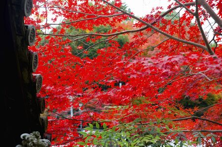 Hase: Foliage of the hasedera Temple