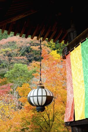 hase: Lantern and autumn leaves
