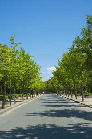 treelined: Tree-lined Avenue