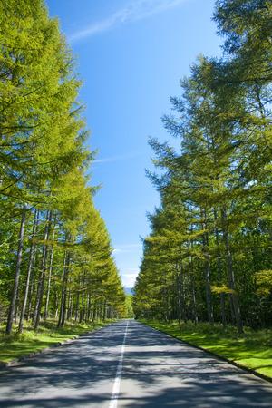 treelined: Treelined Avenue