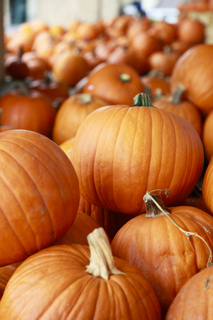 quantities: Pumpkin lined up in large quantities for Halloween Stock Photo