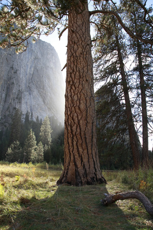 large tree: Cathedral Rock and large tree that looked up from wetlands