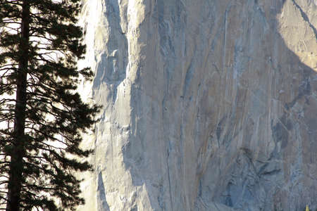 el capitan: Rocks and high conifer El Capitan Stock Photo