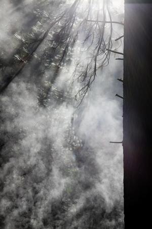 arboleda: Bosque de niebla por la ma�ana
