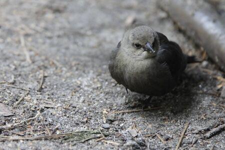 came: Wild birds came to Yosemite camping